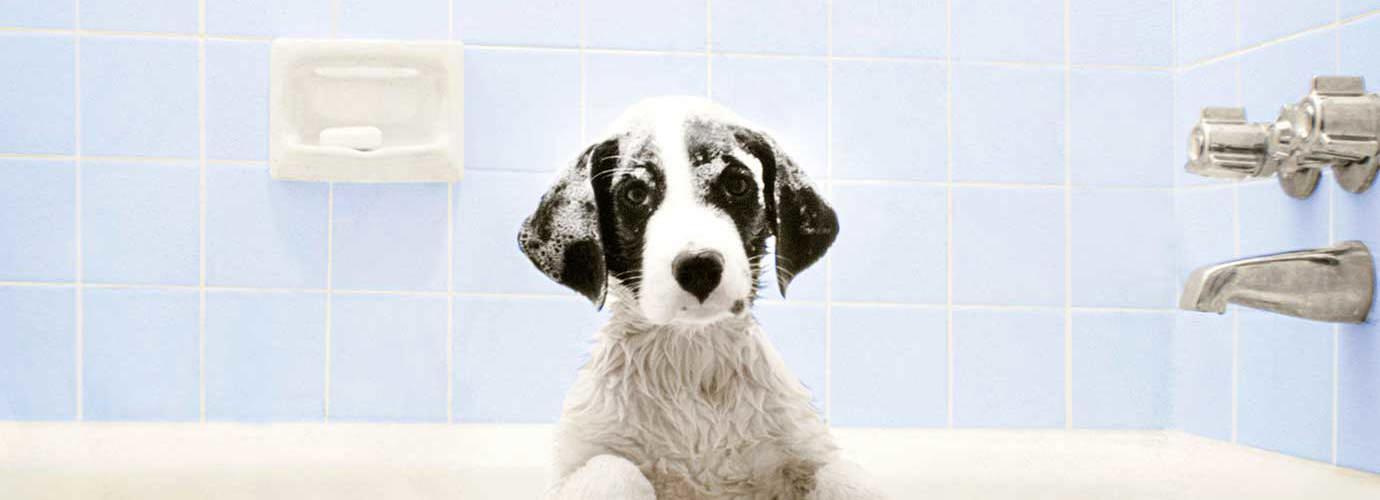 Hond zit in bad te wachten tot het tijd is voor zijn bad