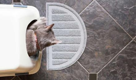 Kitten in een schone kattenbak