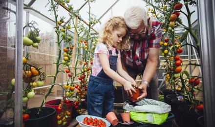 Drie manieren om groene tomaten te laten rijpen