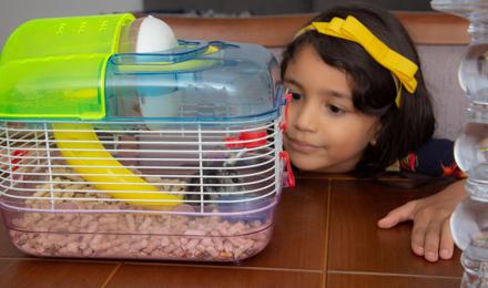 Hoe vaak moet je een hamsterkooi verschonen?