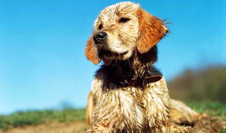 hondenpoten desinfecteren wanneer ze heel modderig zijn